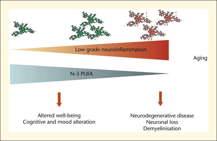 Neuroinflammation and aging: influence of dietary n-3